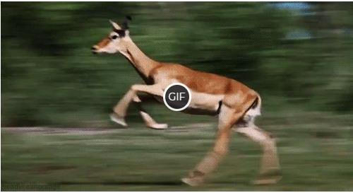 Гифка бешеный олень