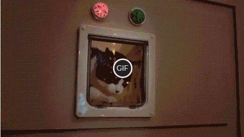 Гифка Новогодние котики