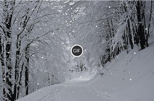 Гифка Падающий снег в зимнем лесу