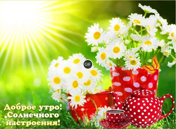 Гифки доброго утра и хорошего дня
