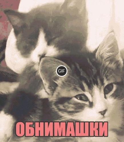 Гифки Коты обнимаются