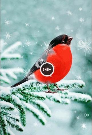 Гифки птицы на снегу