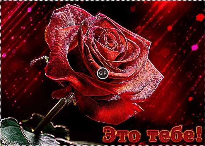 Гифки цветы розы букеты большие