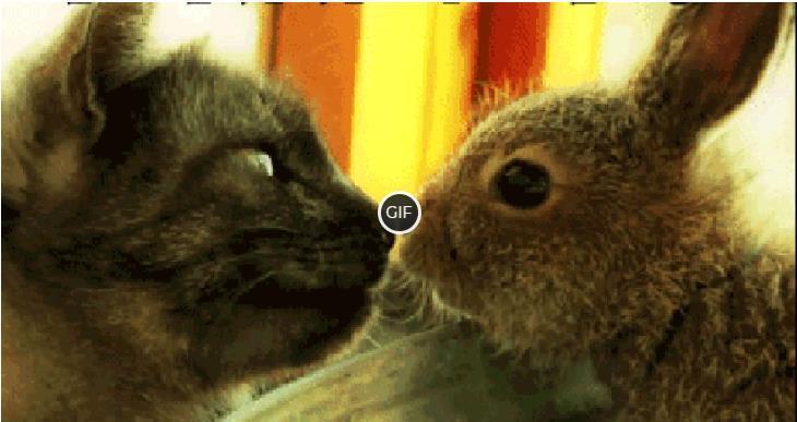 Гифки с животными смешные и милые