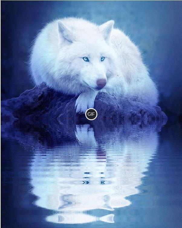 Гифки с волками