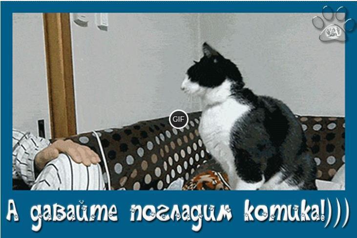 Гифки с котиками смешные