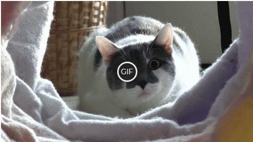 Прикольные гифки с котами