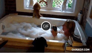 Гифки с котами смешные