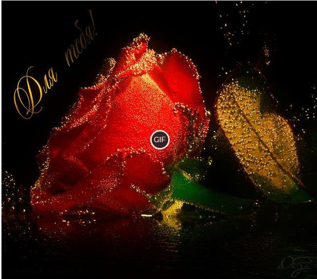 Гифки живые мерцающие супер картинки цветы о любви