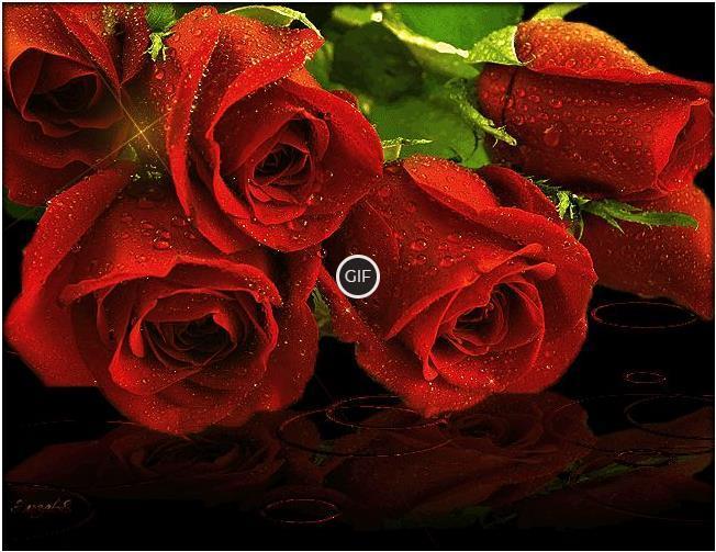 Гифки розы большие букеты