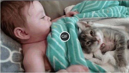 Смешные гифки с животными с добрым утром