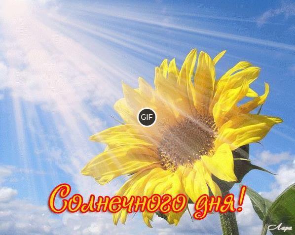 Гифки солнечного дня и хорошего настроения