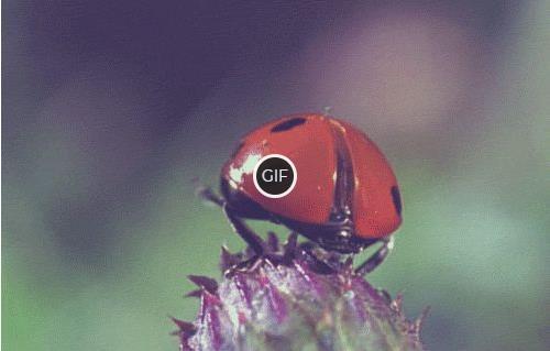 Гифки с природой красивые