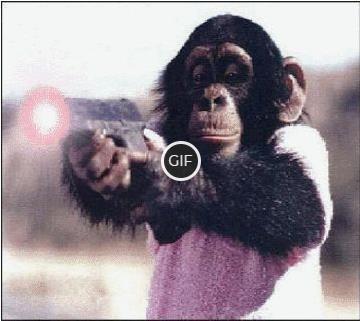 Смешные гифки про животных