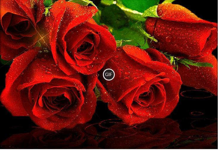 Красивые гифки с розами