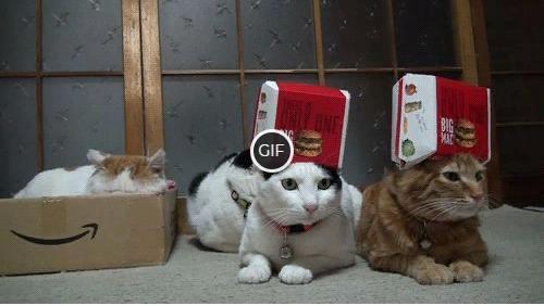Гифки с котами смешные и милые