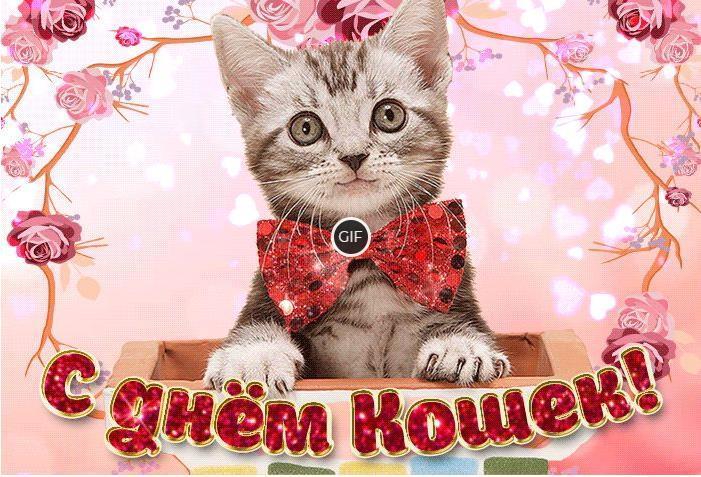 Гифки с днём кошек в России