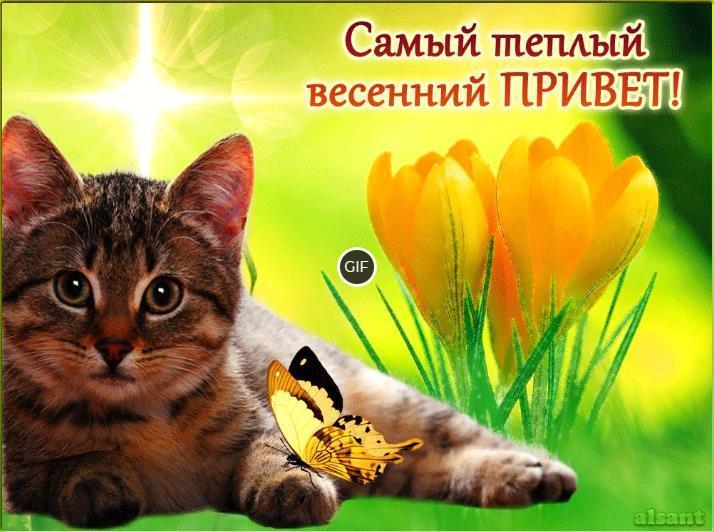 Гифки весенний привет