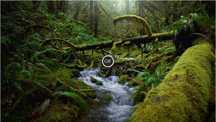 Гифки ручей в лесу