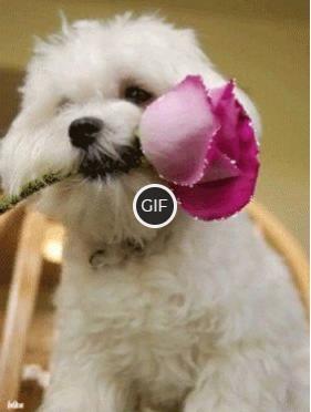 Красивая гифка собака с мерцающей розой в зубах
