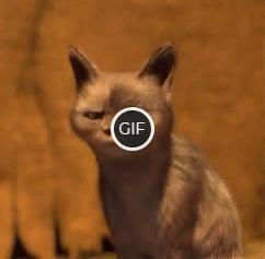Гифка сильное удивление кота