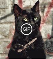 Гифка кошка точит когти