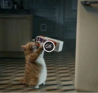Гифка кот пьёт молоко из коробки