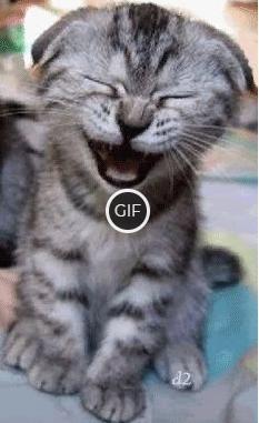 Гифка кошка смеется