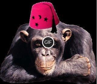 Гифка супер класс от обезьяны
