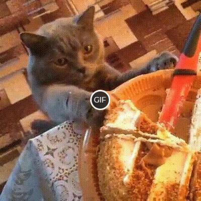 Гифка кот ест торт
