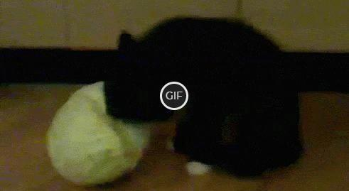 Гифка кот ест капусту