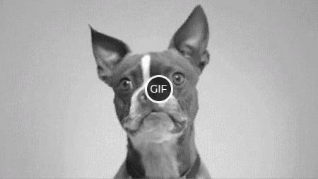 Гифка собака улыбается