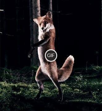Гифка танцующий Лис
