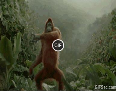 Гифка орангутанг танцует