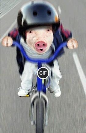 Смешная гифка свинья едет на велосипеде