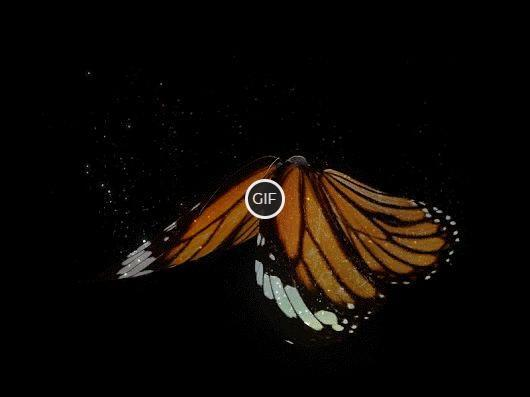 Красивая гифка с бабочкой