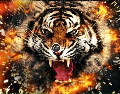 Мерцающая картинка с тигром
