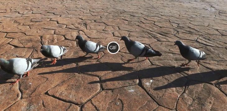Гифка голуби