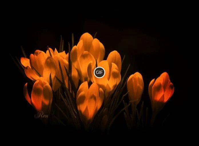 Гифка цветы крокусы для тебя