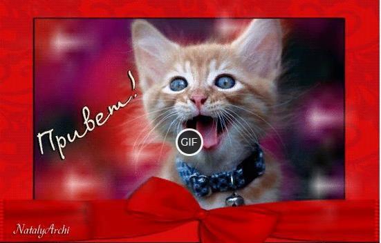 Прикольная гифка привет от котёнка