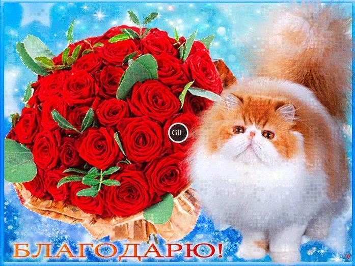 Гифка благодарю кот и розы