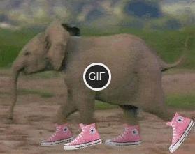 Ржачная гифка слон в розовых кедах