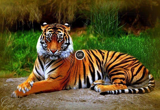 Топ - 10 самых красивых кошек в мире