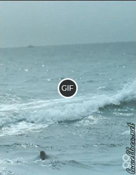 Гифка красивый прыжок дельфина