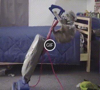 Смешная гифка кот убирается дома