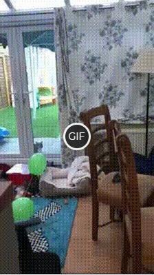 Смешная гифка с прыгающим котом