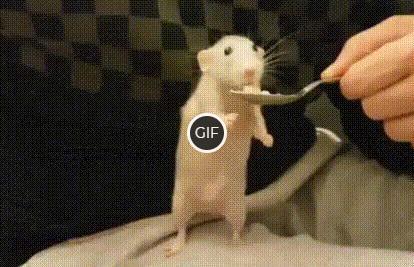 Гифка мышонок ест с ложки