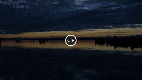 Гифка красивый утренний рассвет над озером