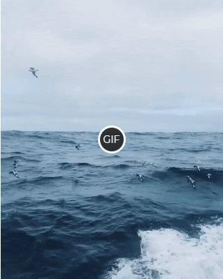 Гифка птицы летят над морскими волнами