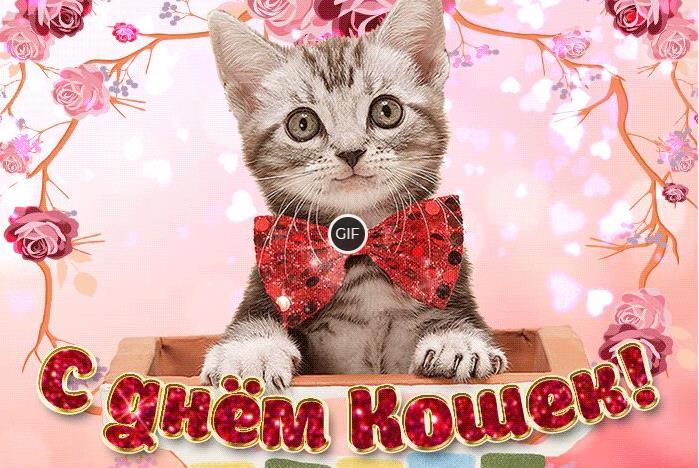 Гифки с Всемирным днём кошек